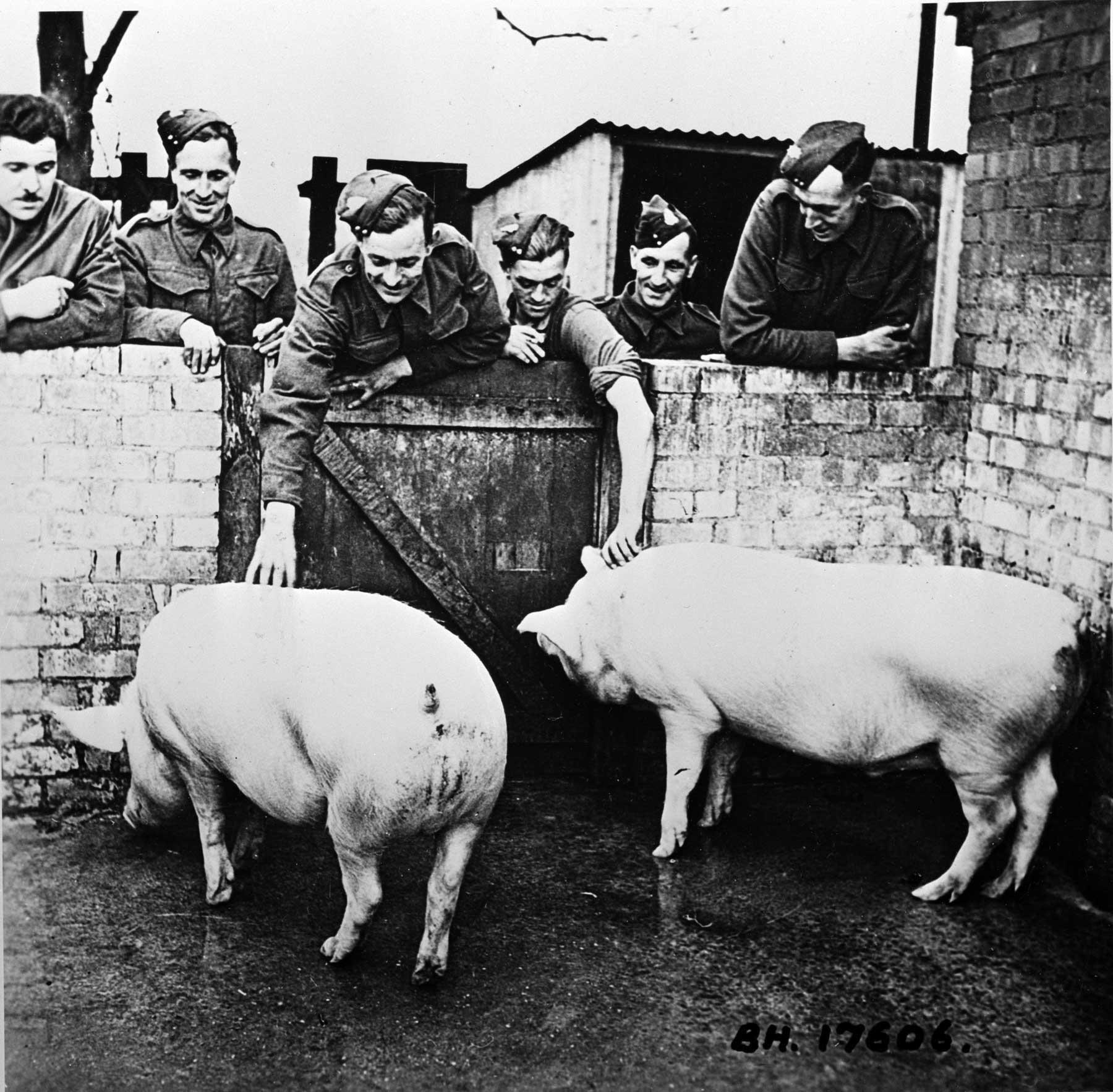Pig clubs ww2 England