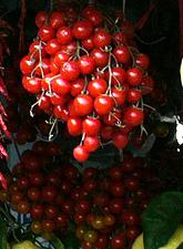 Cherry Tomatoes. Positano, Italy. 2005