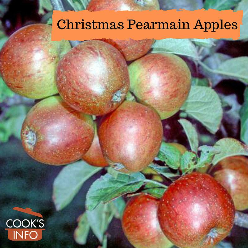 Christmas pearmain on tree