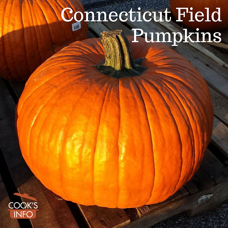 Connecticut Field Pumpkins