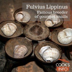Fulvius Lippinus