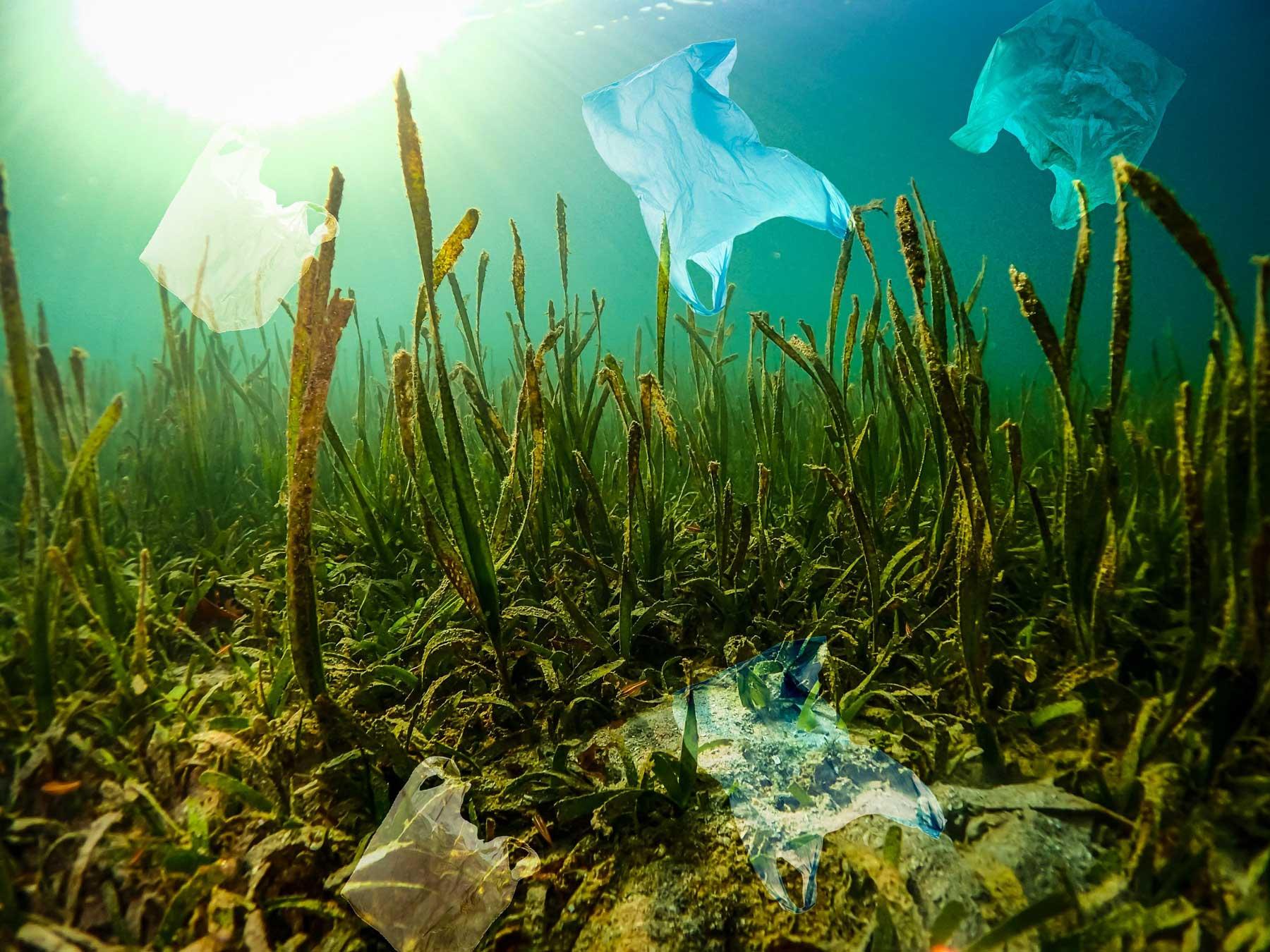 Plastic bags stuck on water plants