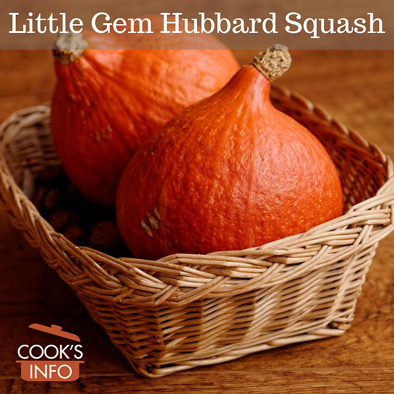 Little Gem Hubbard Squash