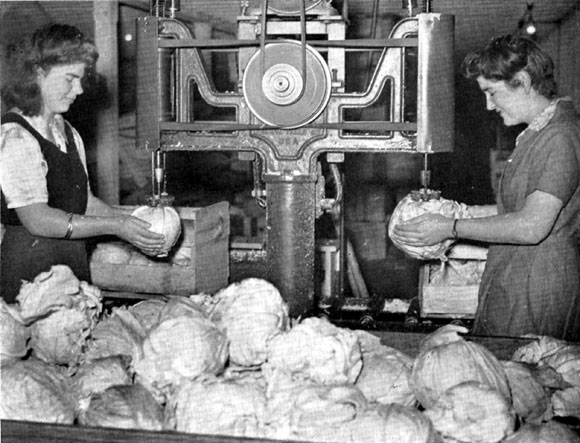 Women at a Pukekohe, New Zeland factory prepping cabbages to be dehydrated.