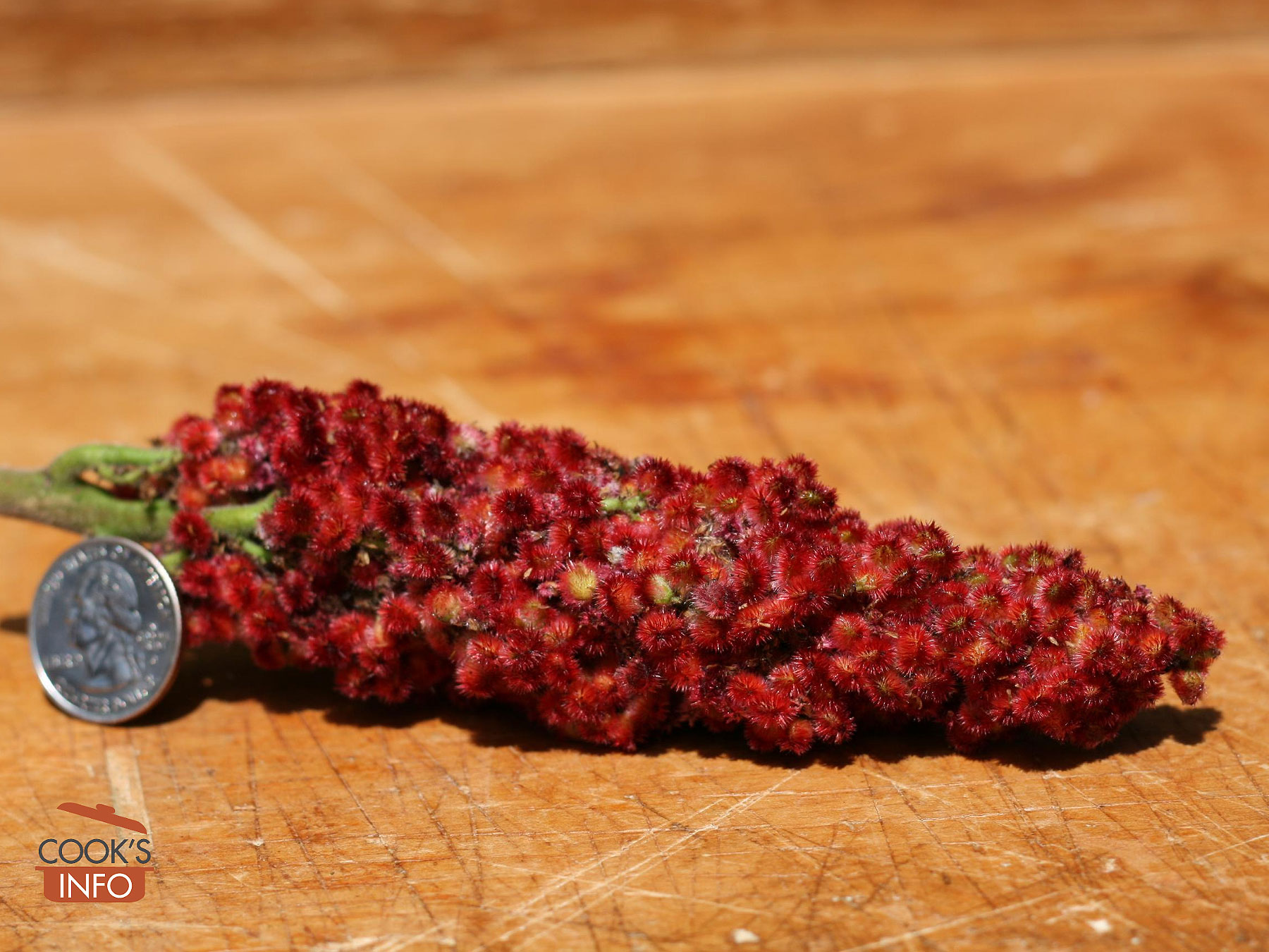 Staghorn sumac berries