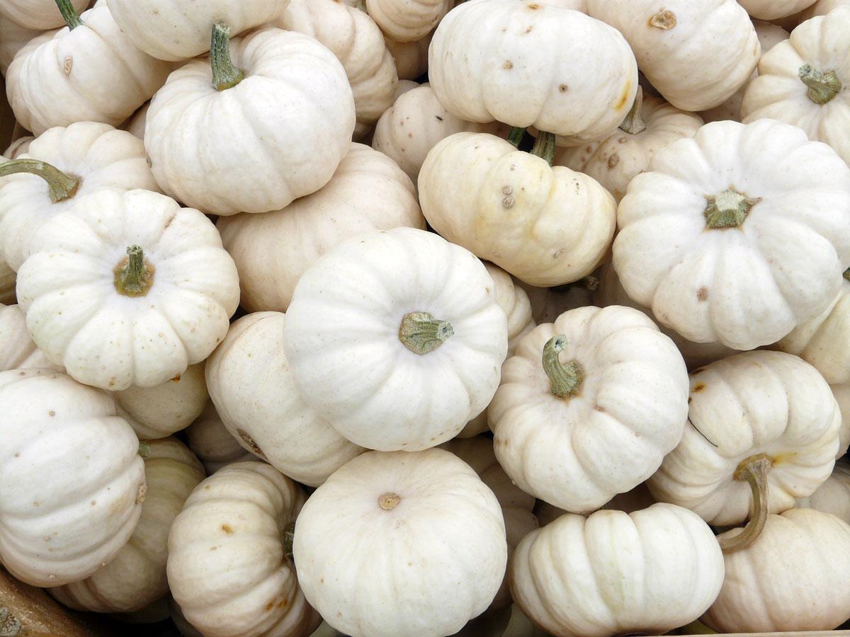 Baby boo pumpkins