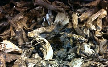 Horn of Plenty Mushrooms (dried)