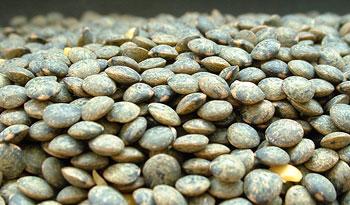 Blue Lentils