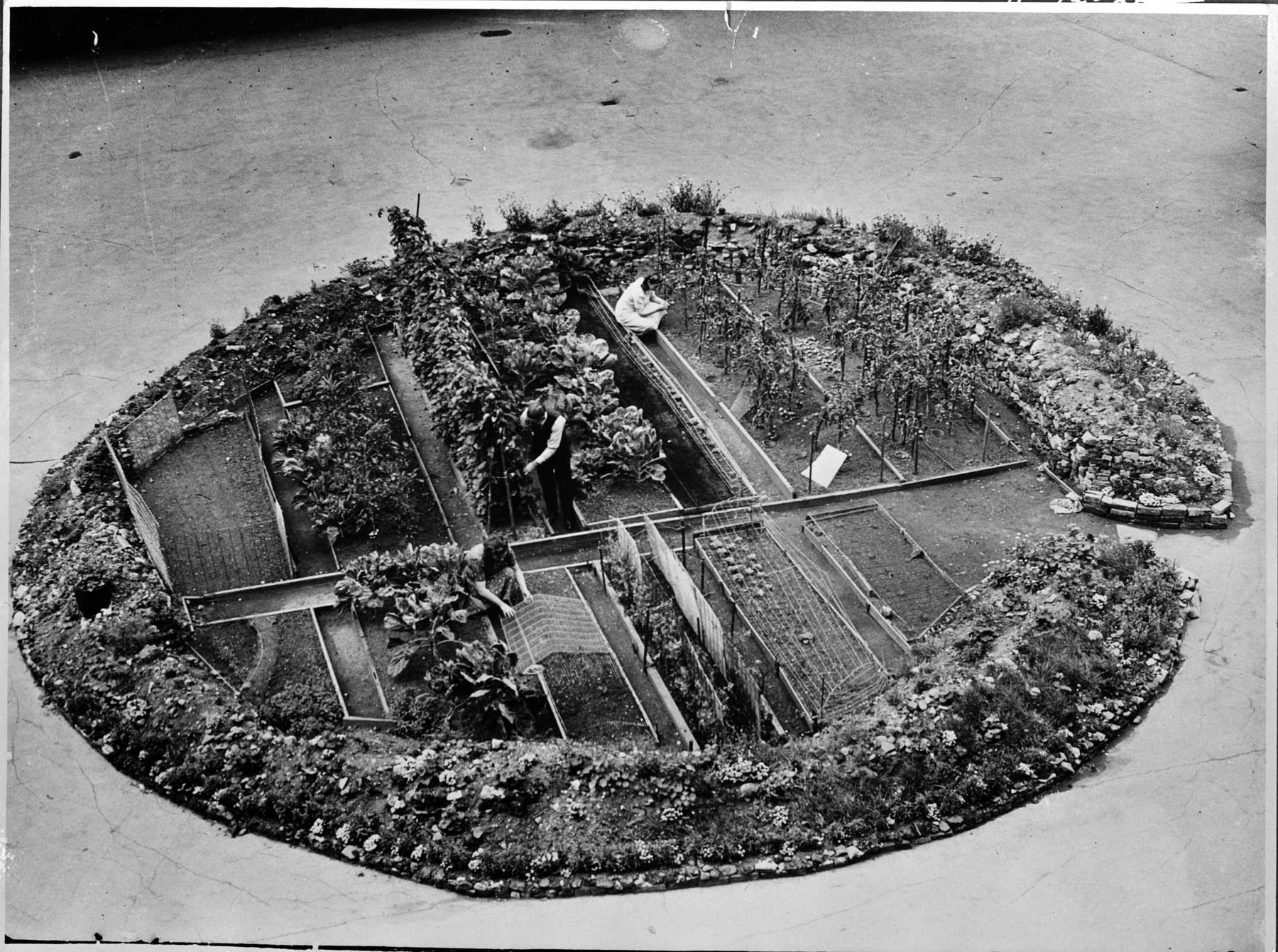 Victory garden planted in a bomb crater