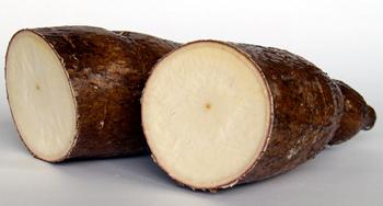 Cassava Cross Section
