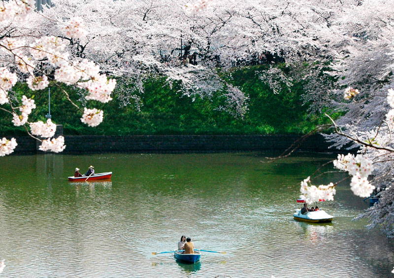 Cherry blossoms by lake in Japan