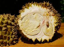 Durian Fruit Interior