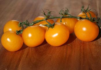 Golden Cherub Tomatoes