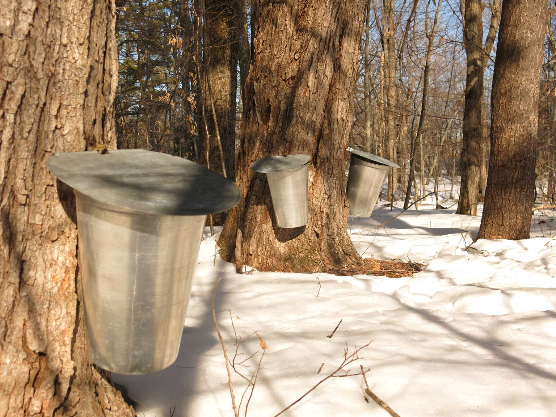 Traditional maple syrup buckets
