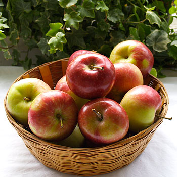 Paula Red Apple