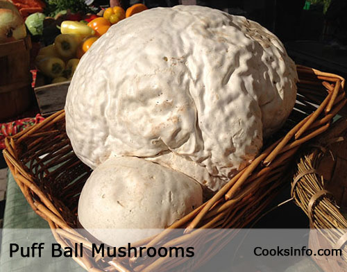 Puff Ball Mushroom